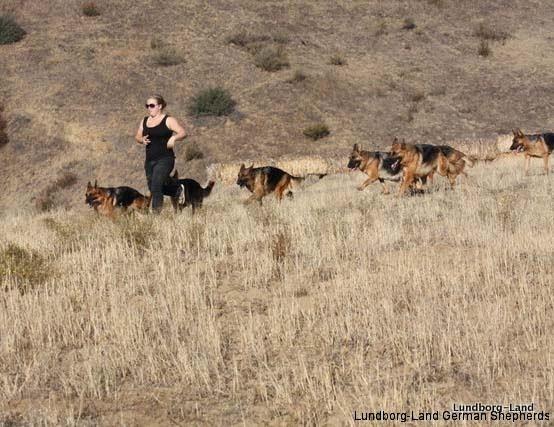 Lundborg-Land Dogs running
