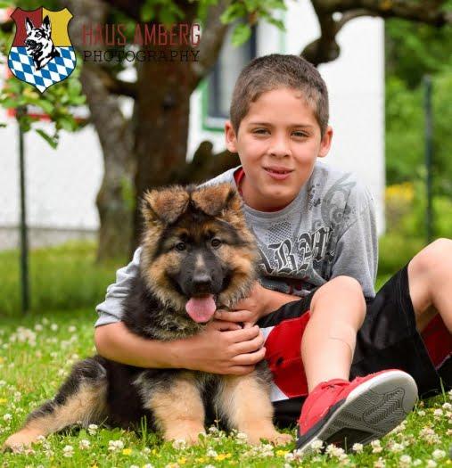 Ken Puppies 14
