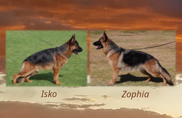 Isko x Zophia Litter