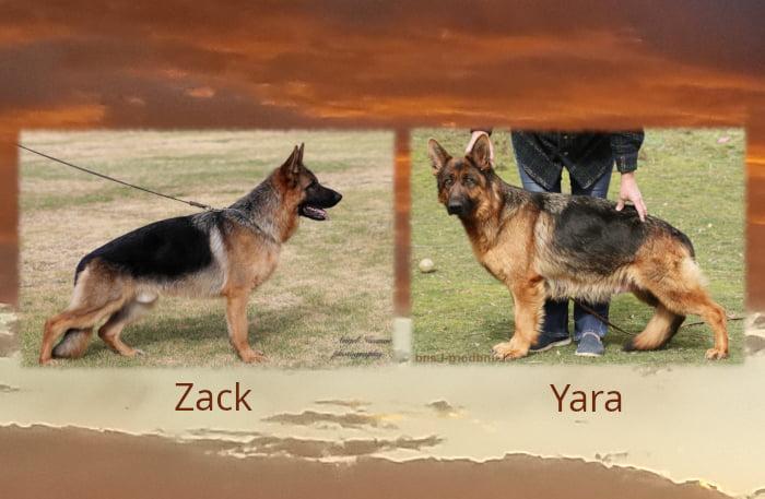Zack Yara Litter