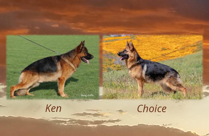 Ken Choice Litter