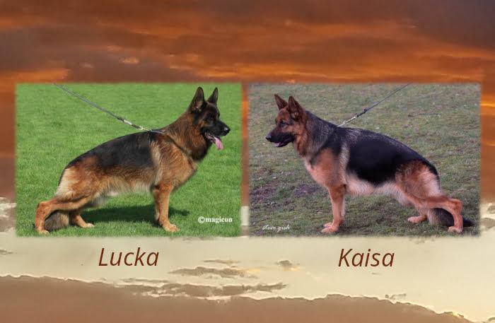Luka Kaisa LItter