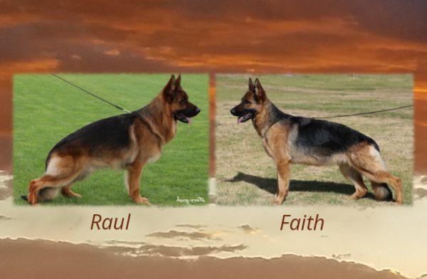 Raul X Faith Litter