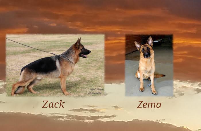Zack X Zema Litter
