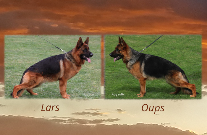 Lars x Oups Litter