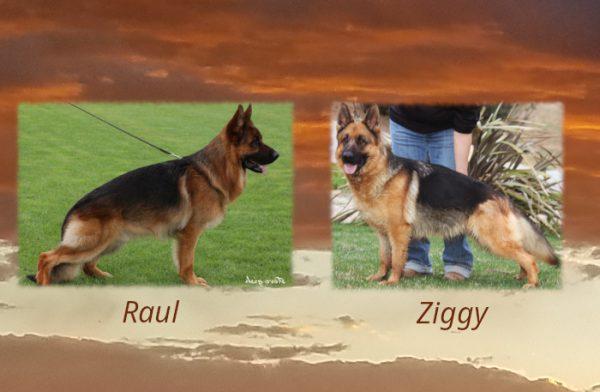 Raul x Ziggy Litter