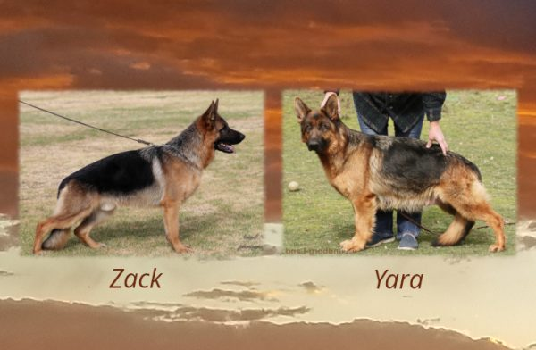 Zack x Yara Litter