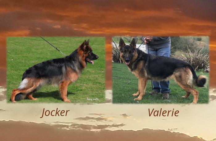 Jocker x Valerie LItter