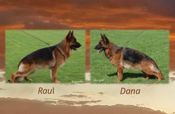 Raul x Dana Litter