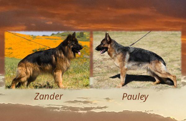 Zander x Pauley Litter