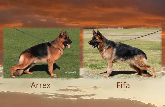 Arrex Eifa LItter