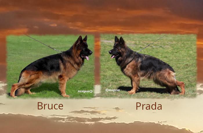 Bruce x Prada Litter