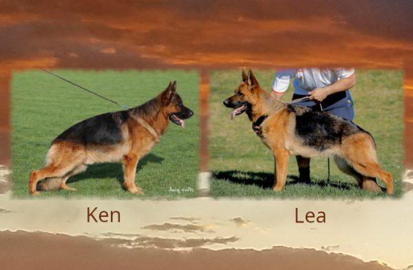 Ken x Lea Litter