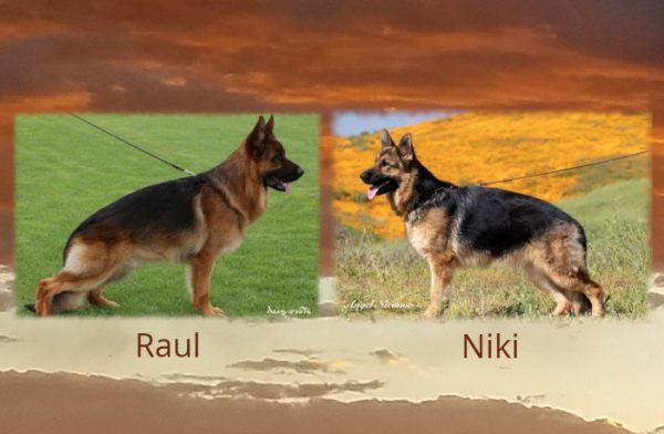 Raul x Niki Litter