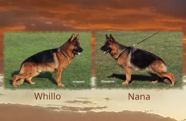 Whillo Nana Litter