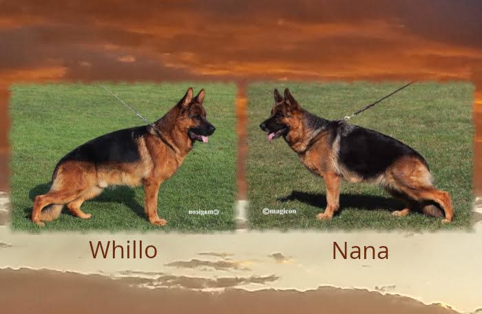 Whillo Nana Litter