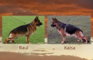 Raul x Kaisa Litter
