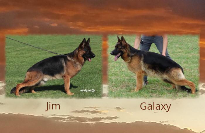 Jim x Galaxy Litter
