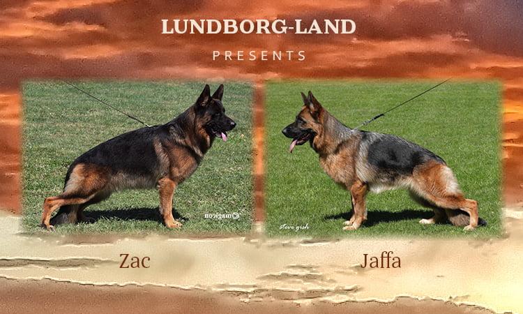 Zac x Jaffa Litter