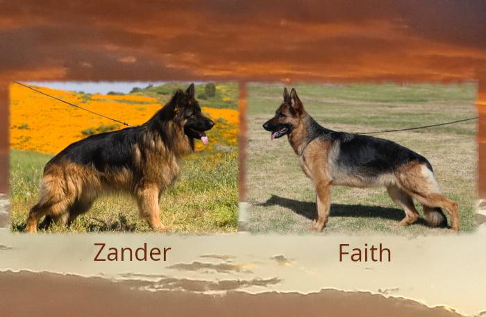 Zander Faith Litter