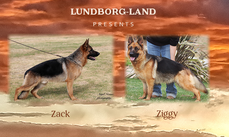 Zack x Ziggy Litter