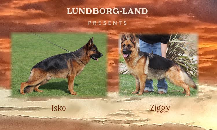 Isko x Ziggy Litter