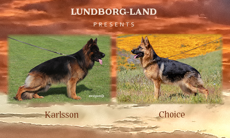 Karlsson x Choice LItter